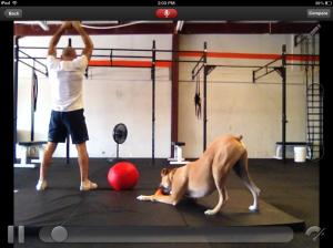 Screen shot. Luke is one funny dog!