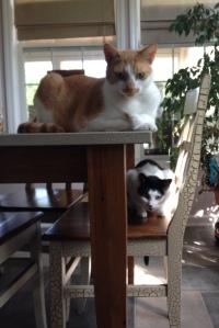 Bad kitties!