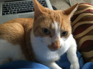 Zac is a very bad kitty! He got in the way of my blogging.